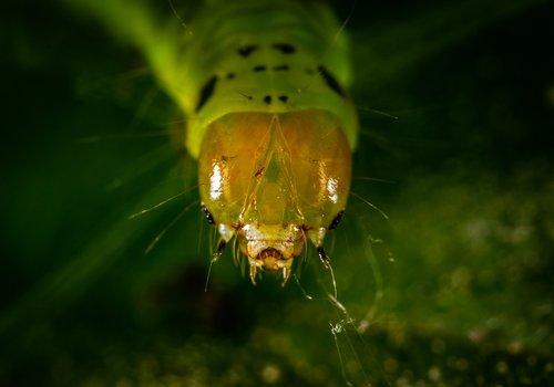 insect  macro  bespozvonochnoe