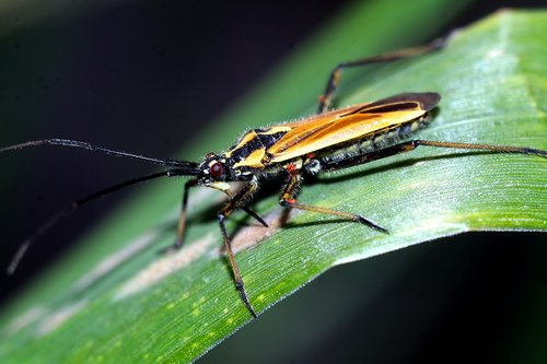 insect  macro  nature