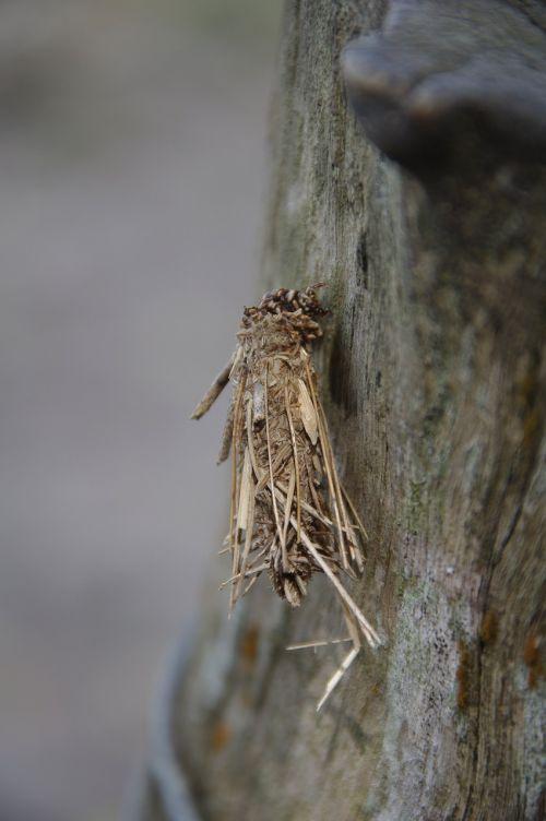 insect grub bug