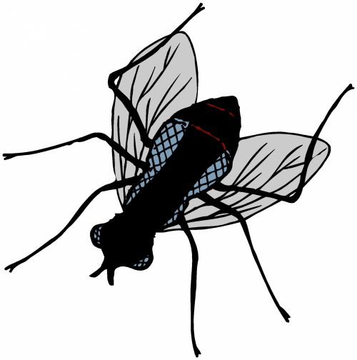 Insect 63