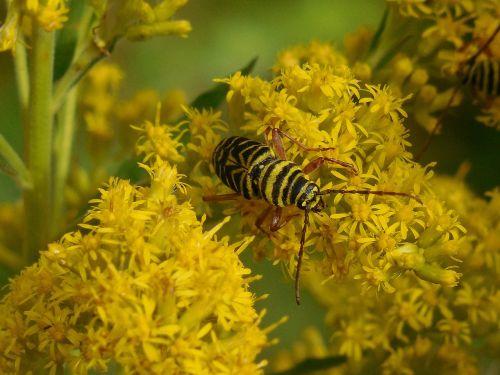 insect bug beetle