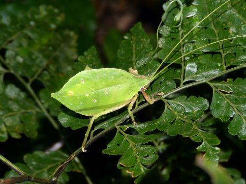 insect probe costa rica