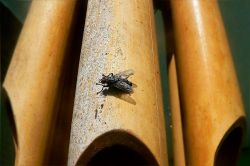 insect fly beetle