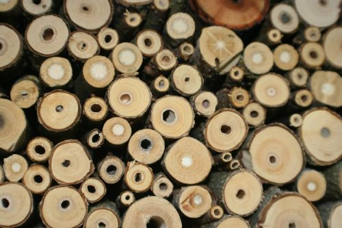 insect hotel insect breeding help