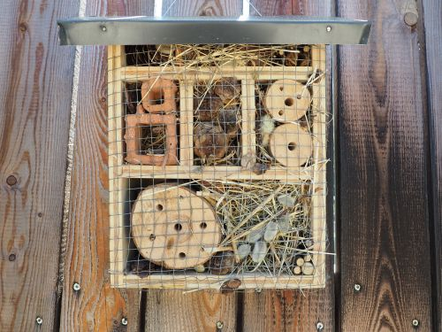 insect hotel bee bee hotel