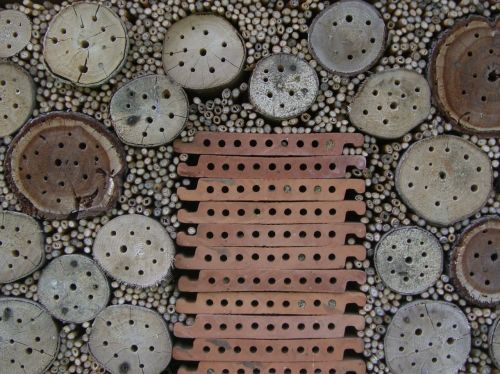 insect hotel nesting help drill holes