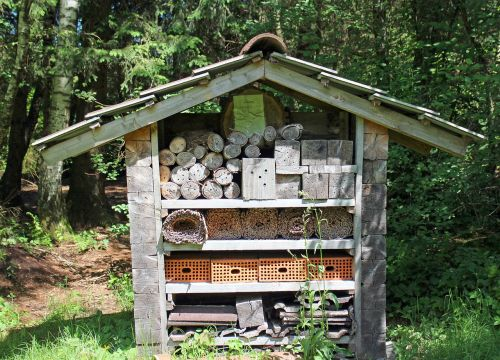 insect hotel nesting help wild bees