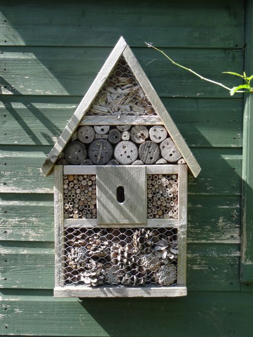 insect house insect bee