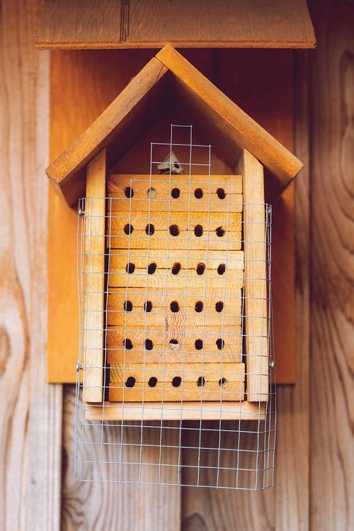 insect house  bee hotel  solitary bees