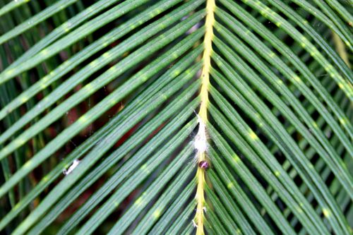 Insect In The Leaves
