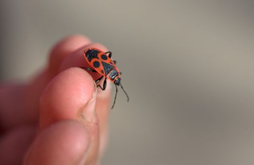 insecta hand fingers
