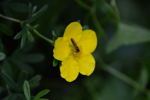 Insect And Flower