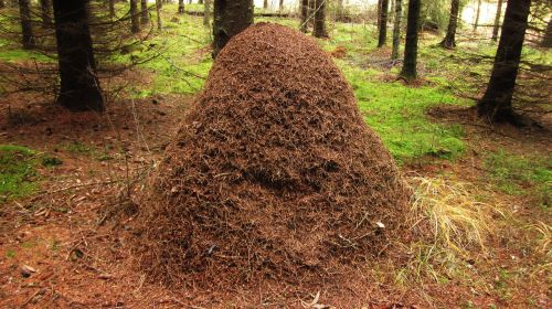 insects forest the anthill