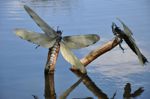 insects lake artificial insects