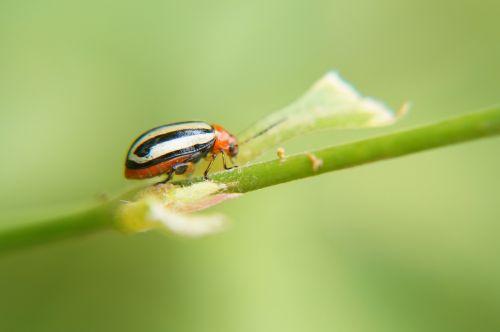 vabzdžiai,entomologija,mokslas,biologija,gamta,Salvadoras,klaidas,makro,mikrofotografavimas