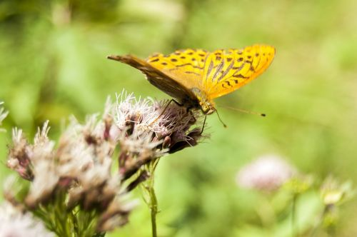 insects butterflies yellow