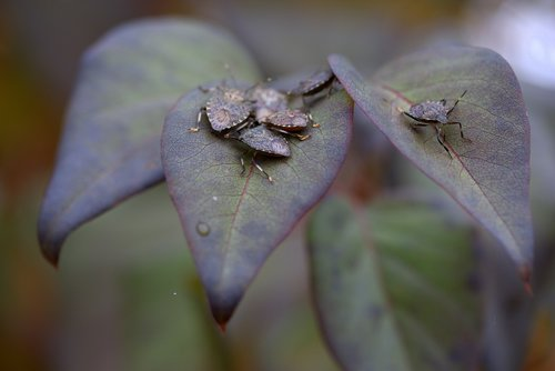 insects  leaves  multiplication