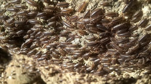 insects bugs animal