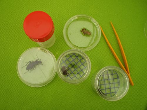 insects experience box-magnifying glass