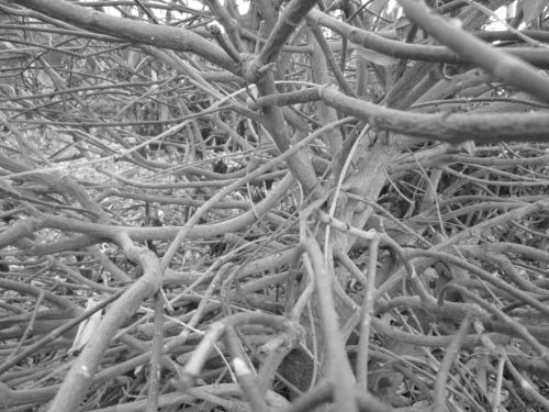 Inside Bush 8