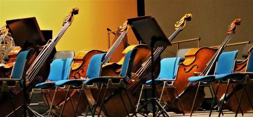 instrument bass double bass