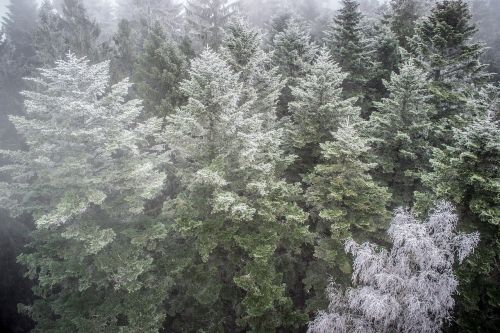 inversion forest nature