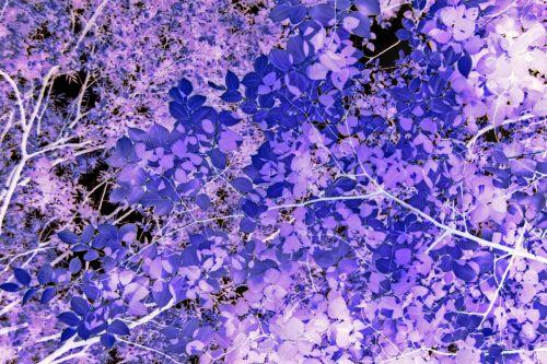 Invert Image Of Dense Foliage