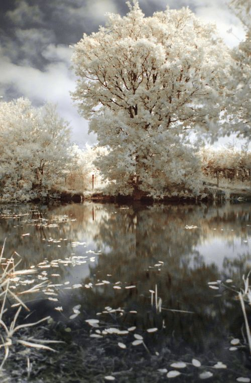 ir infrared tree
