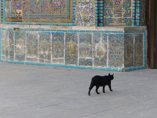 iran cat black