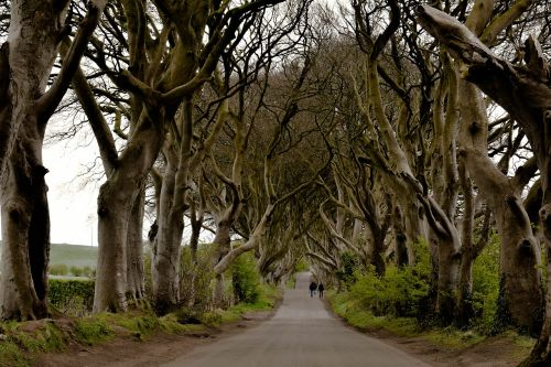 ireland dark hedges
