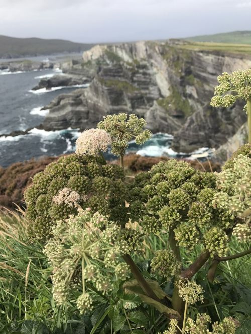 ireland cliffs sea