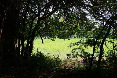 Irene Dairy Farm, Green Meadow