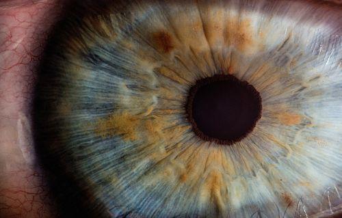 iris pupil eyes