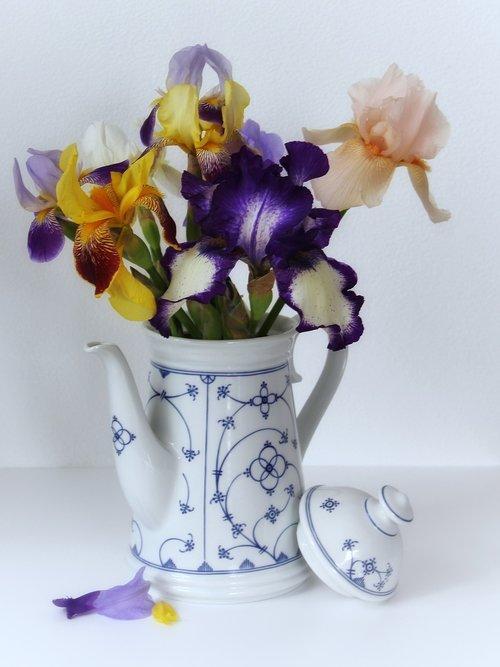 iris  schwertliliengewaechs  vase