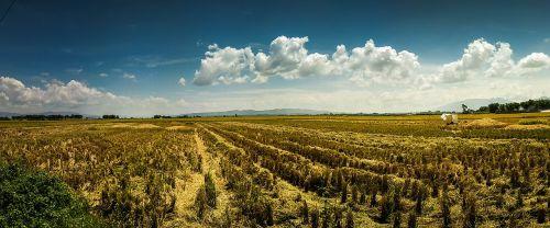 irrigation paddy northsumatera
