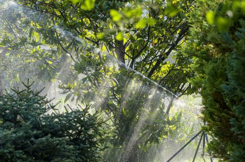 irrigation magnolia sprinkler system