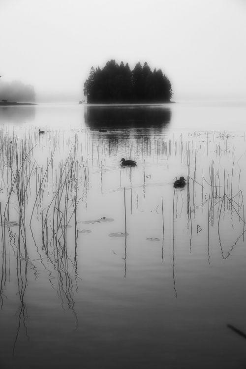 island ducks mist