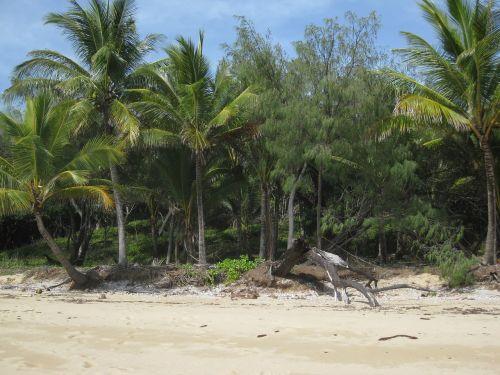 island beach palm