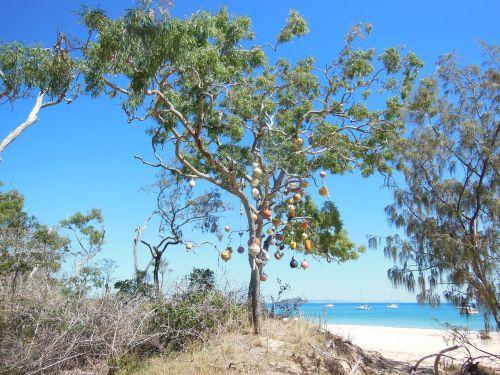 sala,medis,atogrąžų,egzotiškas,atogrąžų fonas,rojus,gamta,kelionė,papludimys,atogrąžų paplūdimys