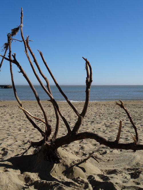 isle of wight sandown beach branches