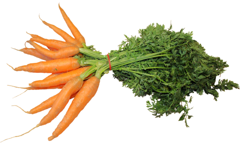 isolated federal carrots vegetables