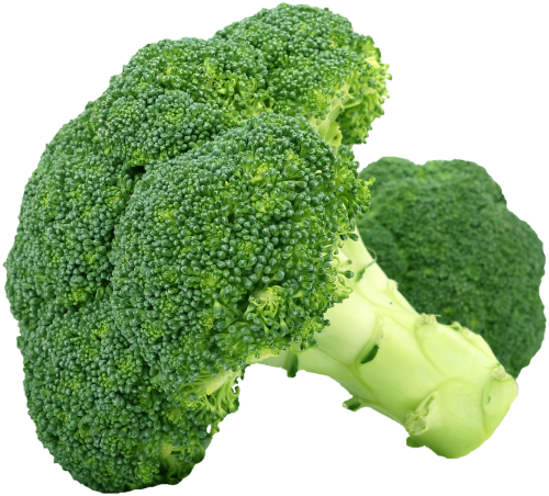 isolated broccoli vegetables