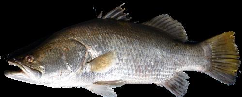 isolated fish swim
