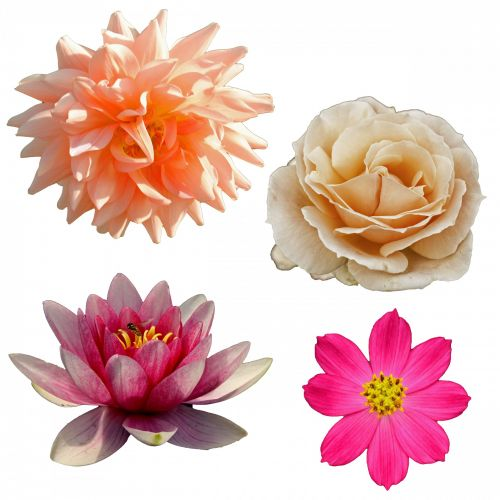 Isolated Flower Clipart