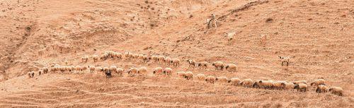 israel berger herd