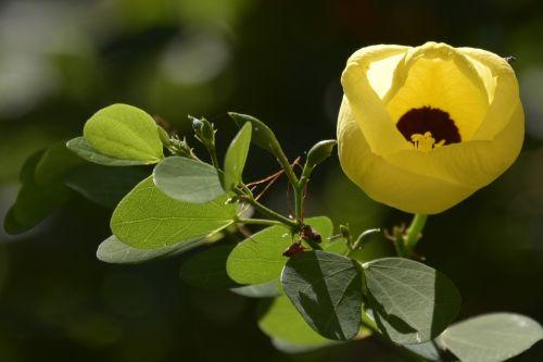 israeli summer flower