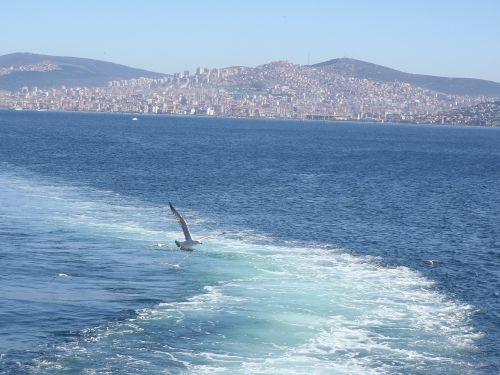 istanbul sea gulls
