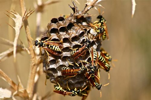 it wasp swarm diaper insect