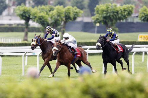 italy horse horses