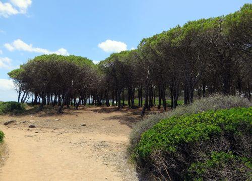 italy sardinia wood